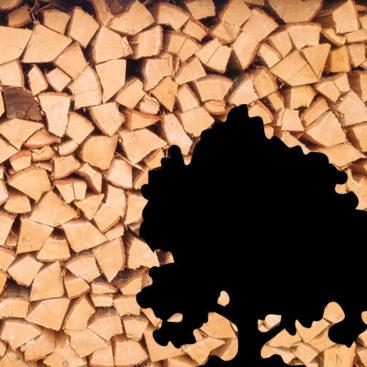 Brennholz Asten Eiche